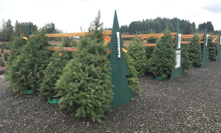 Variety of pre-cut trees