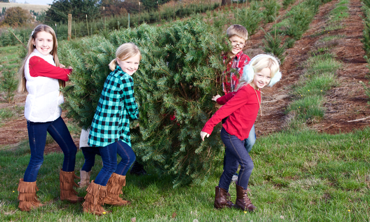 Family carries their Christmas tree